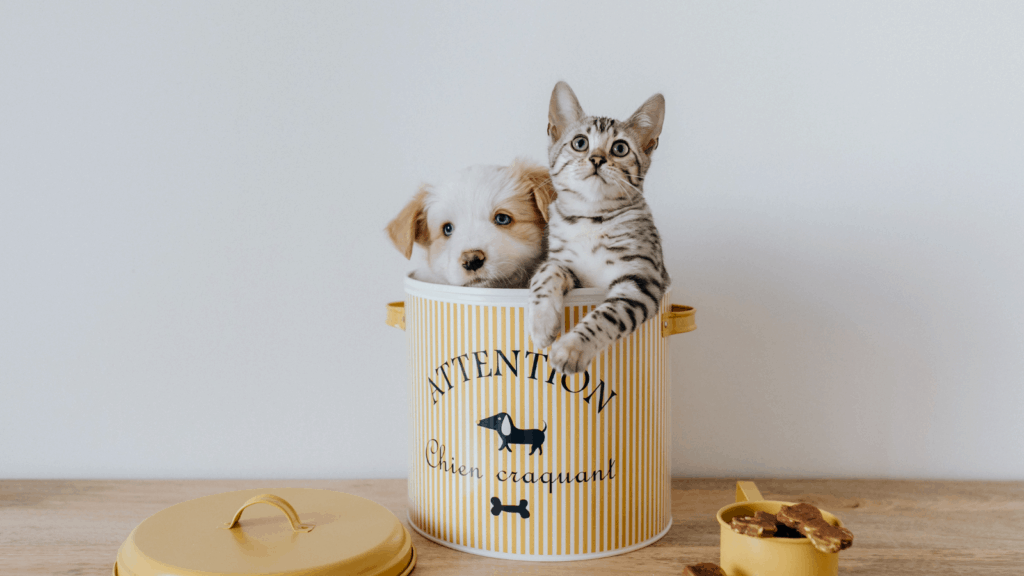 picture of pets, Preparing Your House For Sale